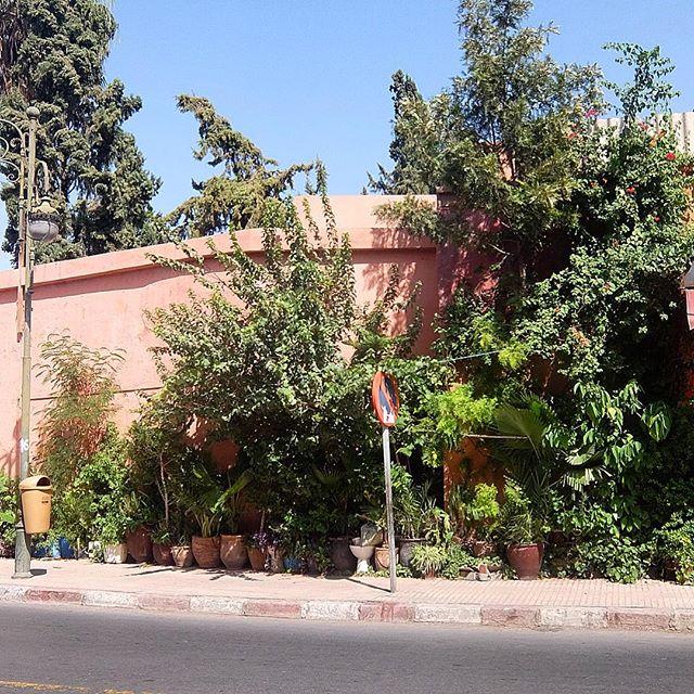 Ist schon witzig - selbst in Marrakesh gibt es GuerillaGardening :-)