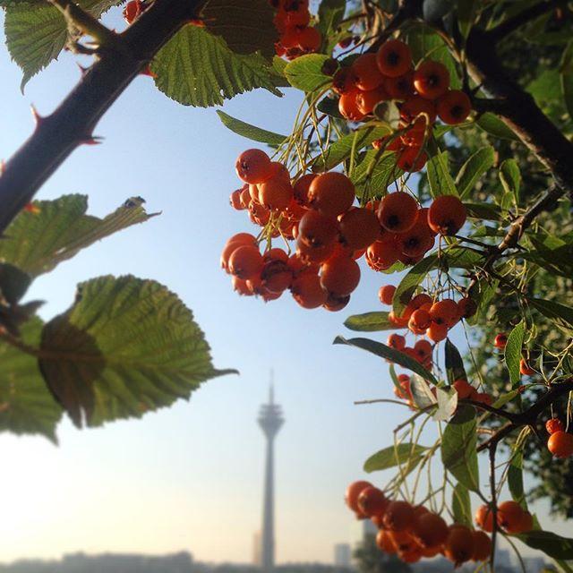 Jepp, der farbenfrohe Herbst kommt :-)
