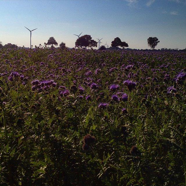 Kleine Verdauungsrunde über die Felder...
