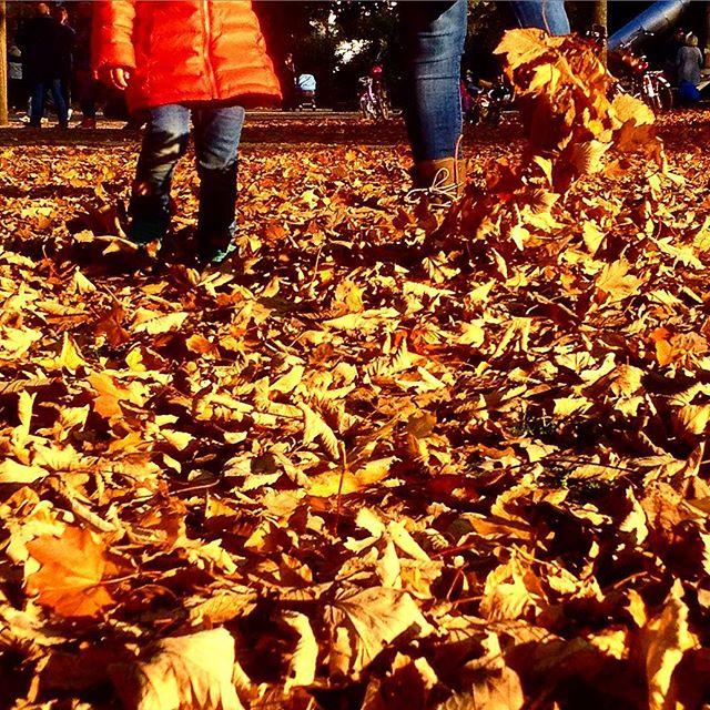 Hinweis des Tages : Übrigens, da vorne gibts noch mehr & größere Blätterhaufen :-)