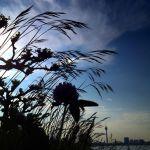 Wildkräuter und Wildblumen am Rhein
