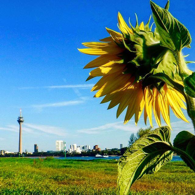 Es gibt zum Glück einige Menschen die Düsseldorf zum Blühen bringen ;-)