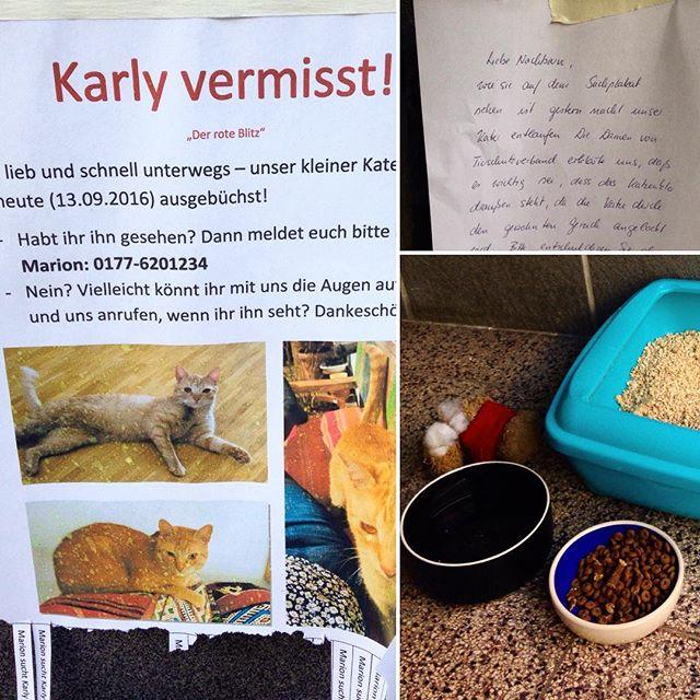 Der Kater Karly wird immer noch vermisst - vermuten wird er zwischen Kronprinzen-, Kirchfeld- und Düsselstraße. Bitte die Augen offen halten...