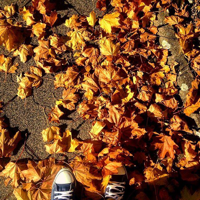 Toll! Es gibt viele raschelnde Blätter…