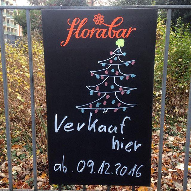 Weihnachtsbaum von der Florabar