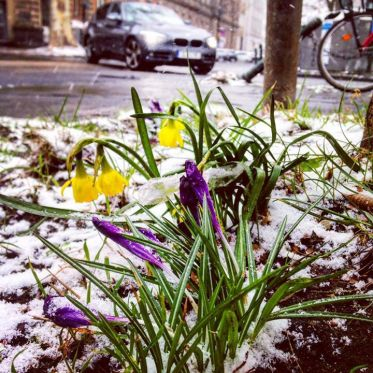 Frühlingsboten an den Straßenecken.