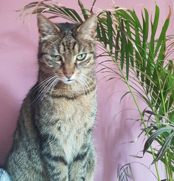 Katzen-Suchmeldung – Christophstraße