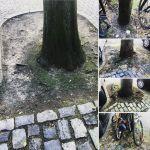 Wir brauchen ein Programm zur Baumvitalisierung  und Standortsanierung.