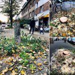 Diese Bäume am AachenerPlatz mussten weg - da der Wille zur Kreativität fehlte.