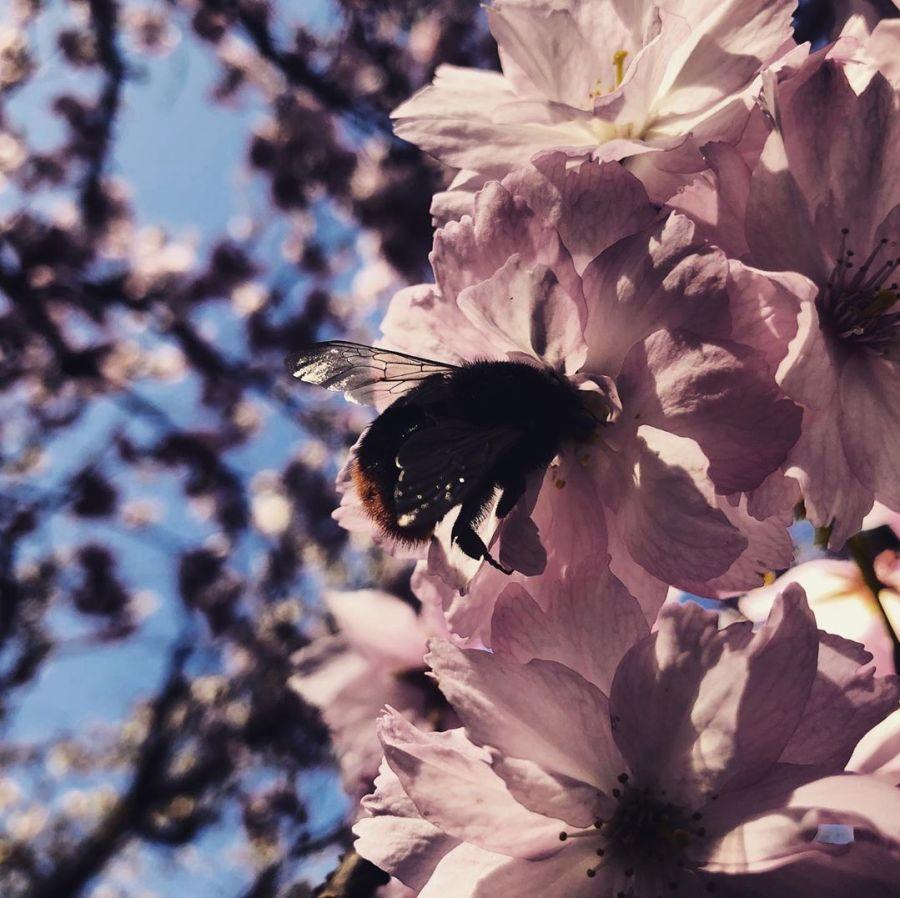 Stell dir vor es ist und kaum einer bekommt es mit… okay, den Hummeln und Insekten ist es egal. Es ist Frühling in der Stadt – aber wir genießen es vom offen Fenster aus, vom Balkon oder kurz beim Einkauf, denn sonst bleibt es dabei