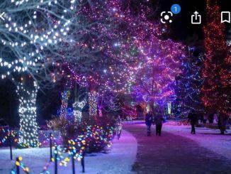 Festive Lighting Along A Trail