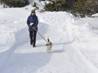 Walking on Winter Trail