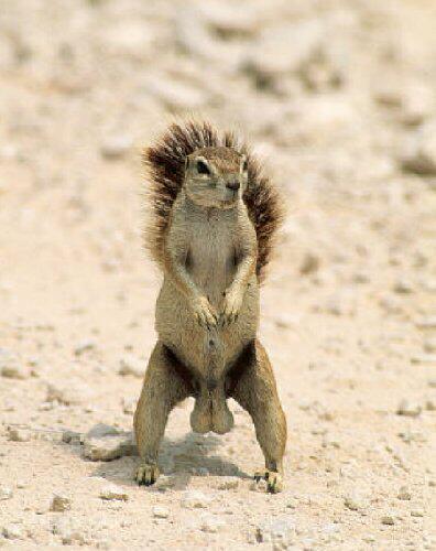 Esquilo Sacudo