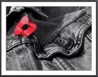 History of Veterans Day:Poppies