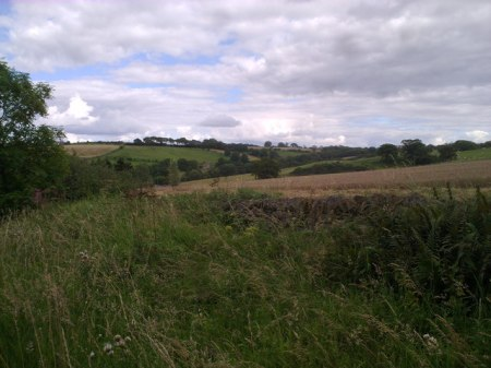 Looking across the valley of the Watergate Burn from the junction with Healeyfield Lane.