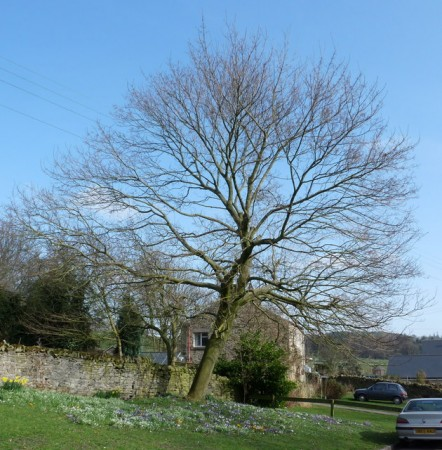 Thornley Village in Spring