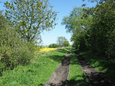 Clarence Railway Trackbed at Preston-le-Skerne.