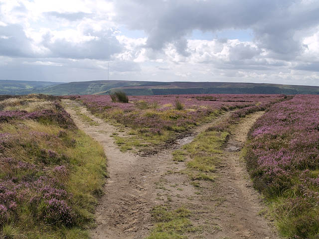 Heading south on Cold Moor, the track forks beyond Three Howes