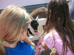 Girls feeding the goats. We were too early so the petting zoo wasn't open yet.