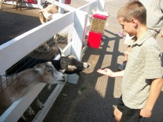Liam feeding the goats - once piece of food at a time