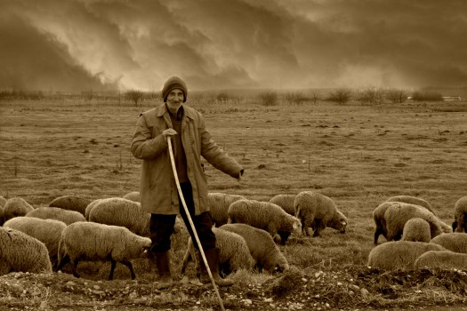 Shepherd with his sheep (Images courtesy of pixabay.com)