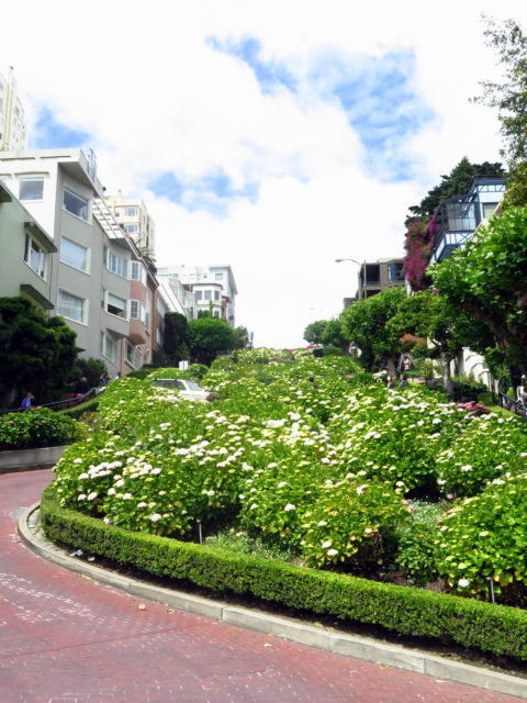 """A curve on Russian Hill's most famous feature--Lombard Street, the so-called """"crookedest street in the world"""". San Francisco, United States, North America."""