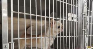 Ankara'da ses telleri kesilen köpeklerin sahibine 127 bin 920 lira para cezası
