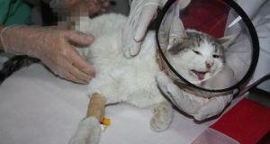 Diyarbakır'da patileri kesilen kedi kurtarılamadı: Olayı gerçekleştirenlerin bulunması için çalışma başlatıldı