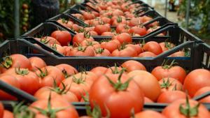 Ege'den yapılan yaş meyve sebze ihracatı 1 milyar doları aşarak rekor kırdı