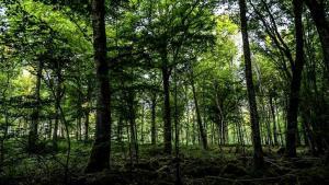 Fransa'da Kadın Cinayeti: Dört Çocuk Annesi Yasemin Çetindağ'ın Cesedi Ormanda Bulundu