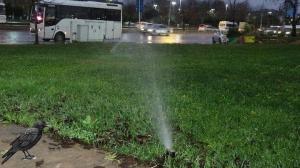 İBB yağmurlu havada çimleri suladı, vatandaşlar tepki gösterdi