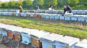 Uzmanlardan 'stok' uyarısı: Baharda arı ölümleri artacak