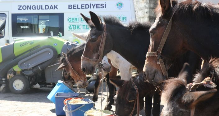 Zonguldak Belediyesi'nde katırlara emeklilik töreni
