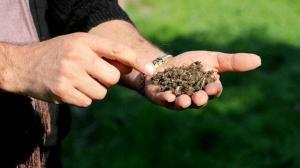 Adana'da arı ölümleri: Arıların fiyatları 2 katına çıkar