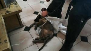 Bolu Haberleri: Donmak üzere bulduğu yavru köpeği saç kurutma makinesiyle 7 saat ısıttı