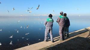 Kısmen donan BeyşehirGölü'ne martılar içinyembırakıldı