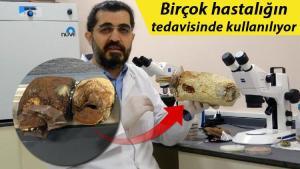 'Ölümsüzlük mantarı' Türkiye'de üretildi! Fiyatı dudak uçuklattı…