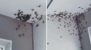 Örümcek Korkusu Olanlar Uzak Dursun: Örümcekler Tarafından İstilaya Uğrayan Odanın Korkutucu Görüntüler