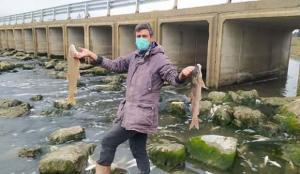 Tarsus'ta, çayda binlerce balık telef oldu