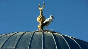 'Vefalı' leylek, bu yıl da göç etmedi: Bizim buraya verdiği süs Allah'ın bir lütfudur