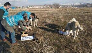 Çetin kış koşullarında İşyurtları sokak hayvanları için seferber oldu