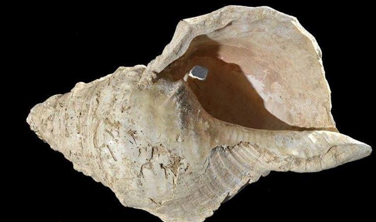 Fransa'da 17 bin yıllık müzik aleti olan deniz kabuğu yeniden ses verdi