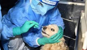 Güney Kore'de evcil kedi ve köpeklere Covid-19 testi uygulaması başladı