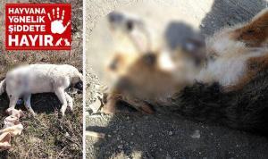 Mahalle ortasında iki köpek silahla vurularak öldürüldü