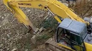 Maltepe'de çevre katliamı: 70 yıllık ağacı kesip toprağın altına gömdüler