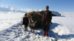 Yüksekova'da besicilerin zorlu kış mesaisi