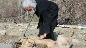 82 yaşında her gün sokak köpeklerini besliyor: Hasta geliyorum iyileşmiş olarak dönüyorum