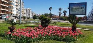 Antalya'da baharın müjdecisi laleler kenti süslüyor