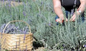 Araştırmaya göre, bitkiler ile insanlar arasında iletişim sağlamak mümkün