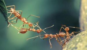 Doğadaki canlılar da insanlar gibi 'sosyal mesafe' kuralları uyguluyor!